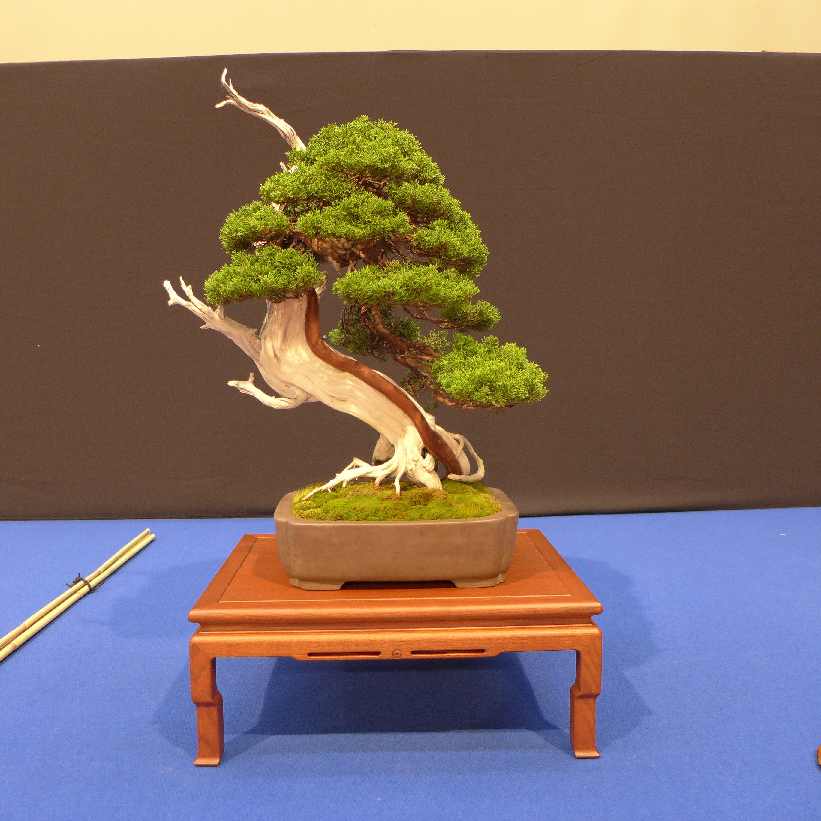Juniperus Chinensis